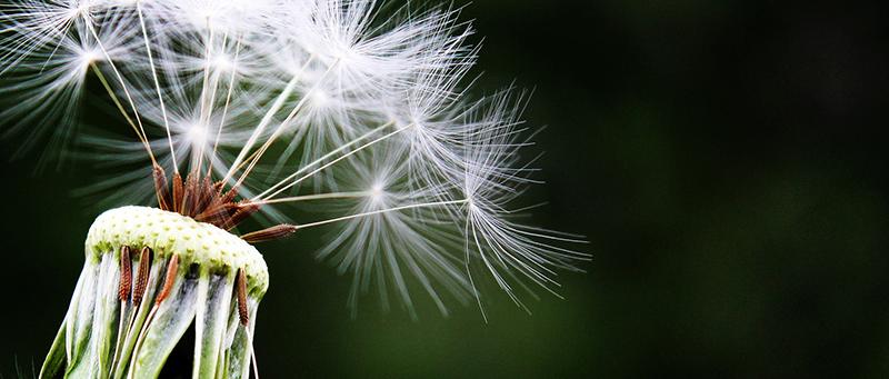 Comment faire face aux allergies ?